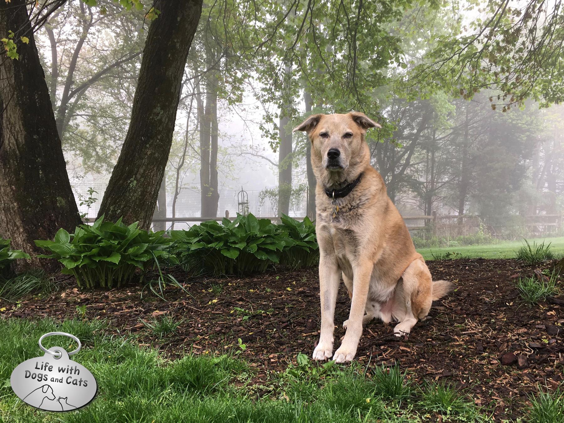 Jasper on his grass-free island.