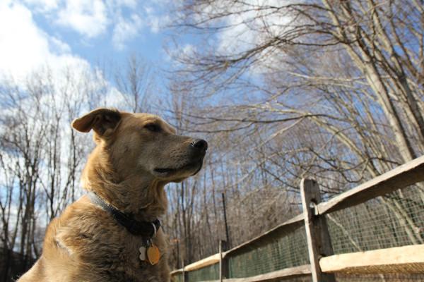 Jasper and the sky