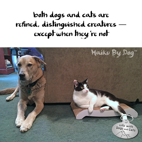 #HaikuByDog both dogs and cats are / refined, distinguished creatures — / except when they're not