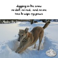 Haiku by Dog: digging in the snow / no dirt, no mud, and no one / has to wipe my paws