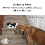 Haiku by Dog: Dreams
