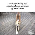 Haiku by Dog: Doga