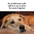 Haiku by Dog: the comfort hound waits / until he is sure he hears / the sound of dog food