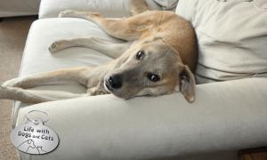 Haiku by Dog: Pillow