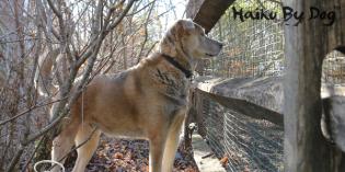 Haiku by Dog: Fence