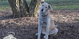 Haiku by Dog: Tilt