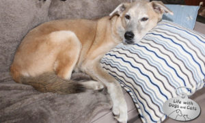 Haiku by Dog: Two