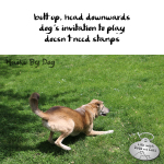 Haiku by Dog: Play
