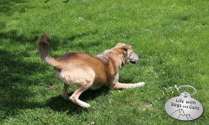 Haiku by Dog: Play