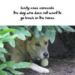 Haiku by Dog: Cave