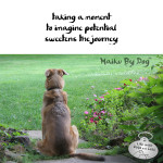 Haiku by Dog: Imagine
