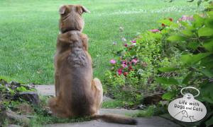 Haiku by Dog: Imagine
