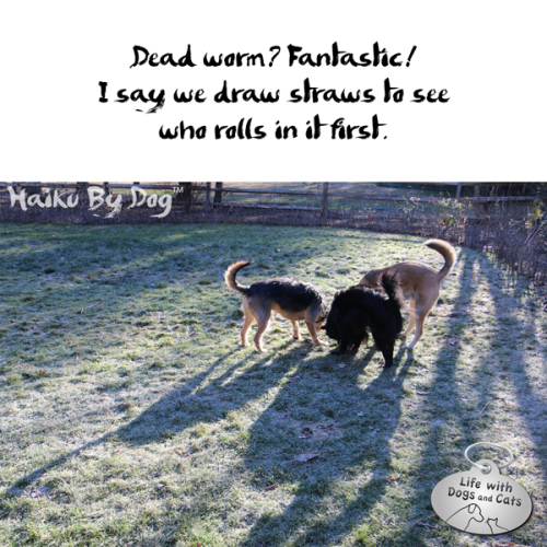 Haiku by Dog: Dead worm? Fantastic! / I say we draw straws to see / who rolls in it first.