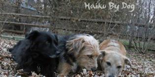 Haiku by Dog: Treasure