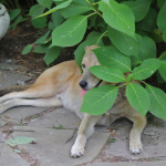 A Shady Dog, Or Finding Re-leaf From the Heat