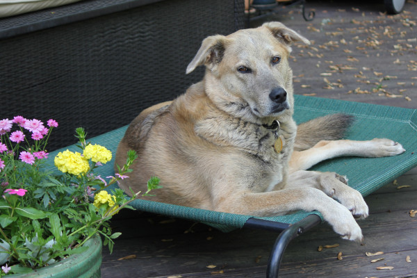 Jasper relaxes in his outdoor bed by a pot of flowers.