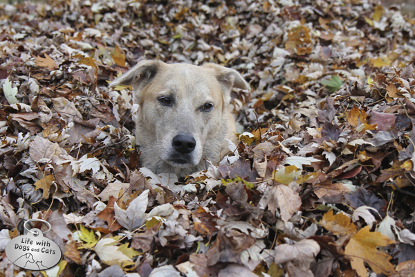 Jasper in the leaves