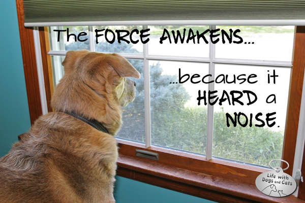 The Force Awakens because it heard a noise.