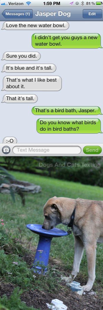 Text from dog: Like the new water bowl. Text from me: That's a bird bath.