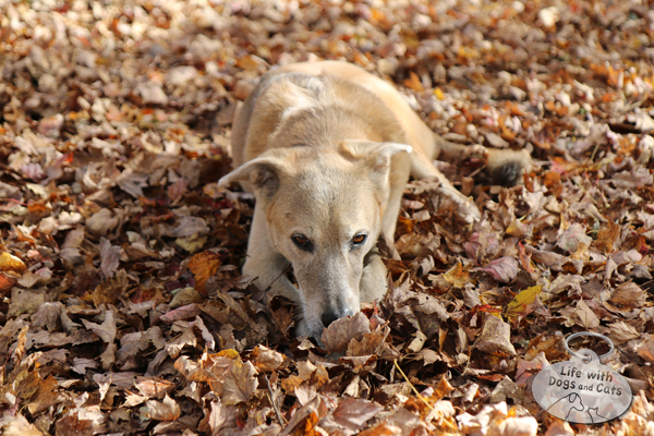 Leaves are comfortable to lie in, make a lovely crunchy sound, and smell good.