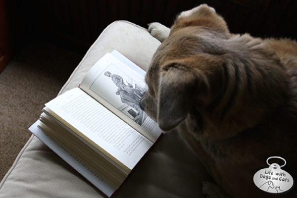 Jasper reads about Abe Lincoln's Dog in the book Abe & FIdo