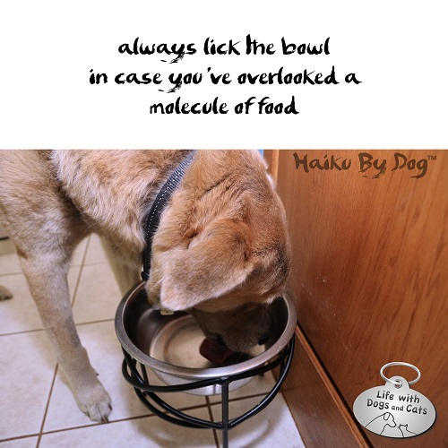 Haiku by Dog: always lick the bowl / in case you've overlooked a / molecule of food