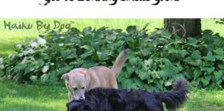 Haiku by Dog: Eau