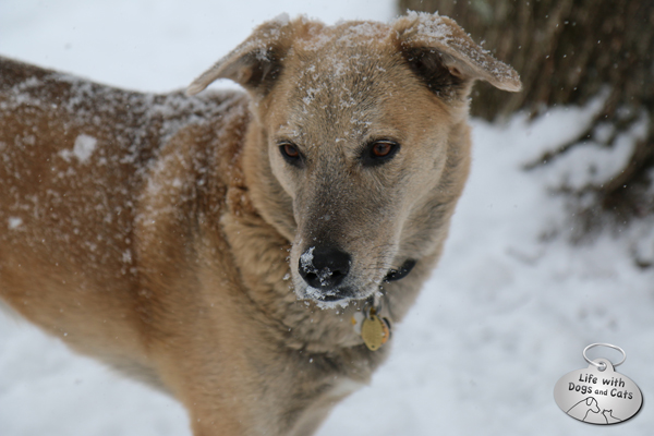 Decorated with snowflakes, Jasper stops to pose and ponder.