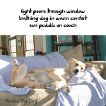 Haiku by Dog: Sun