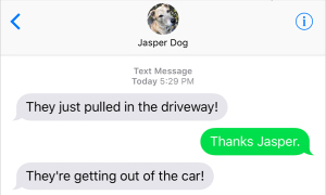 Text from Dog: I. Can't. Even.