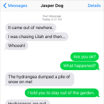 Text from Dog: Hydrangeas are evil