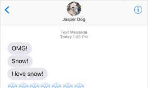 Text from Dog: Snow!