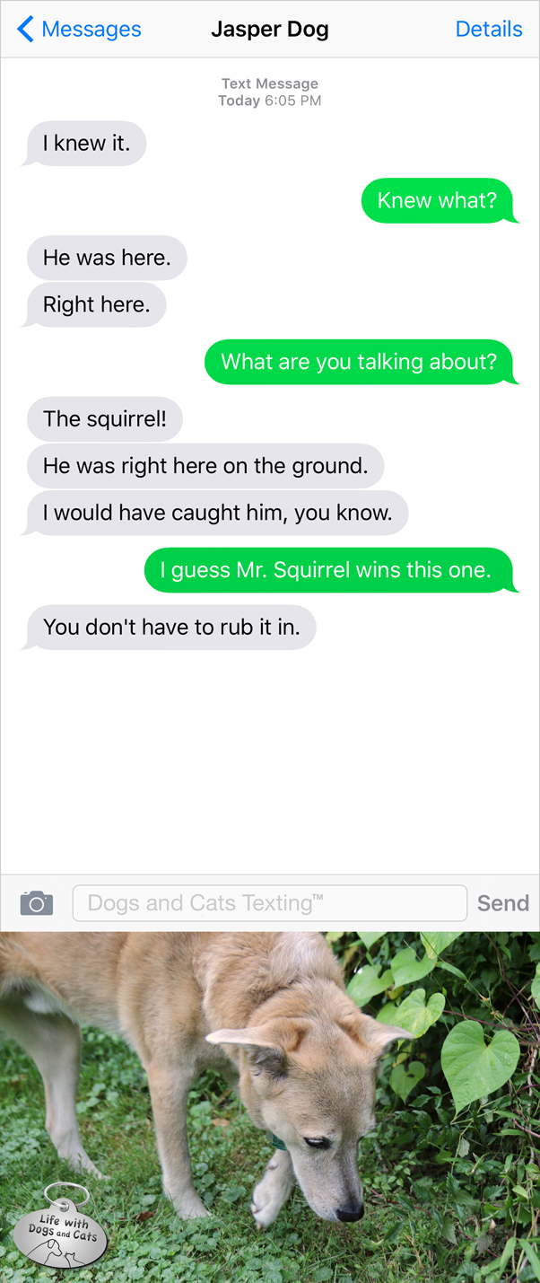 #TextFromDog: I knew it. He was here. Right here. Me: What are you talking about? Dog: The squirrel! I would have caught him, you know.