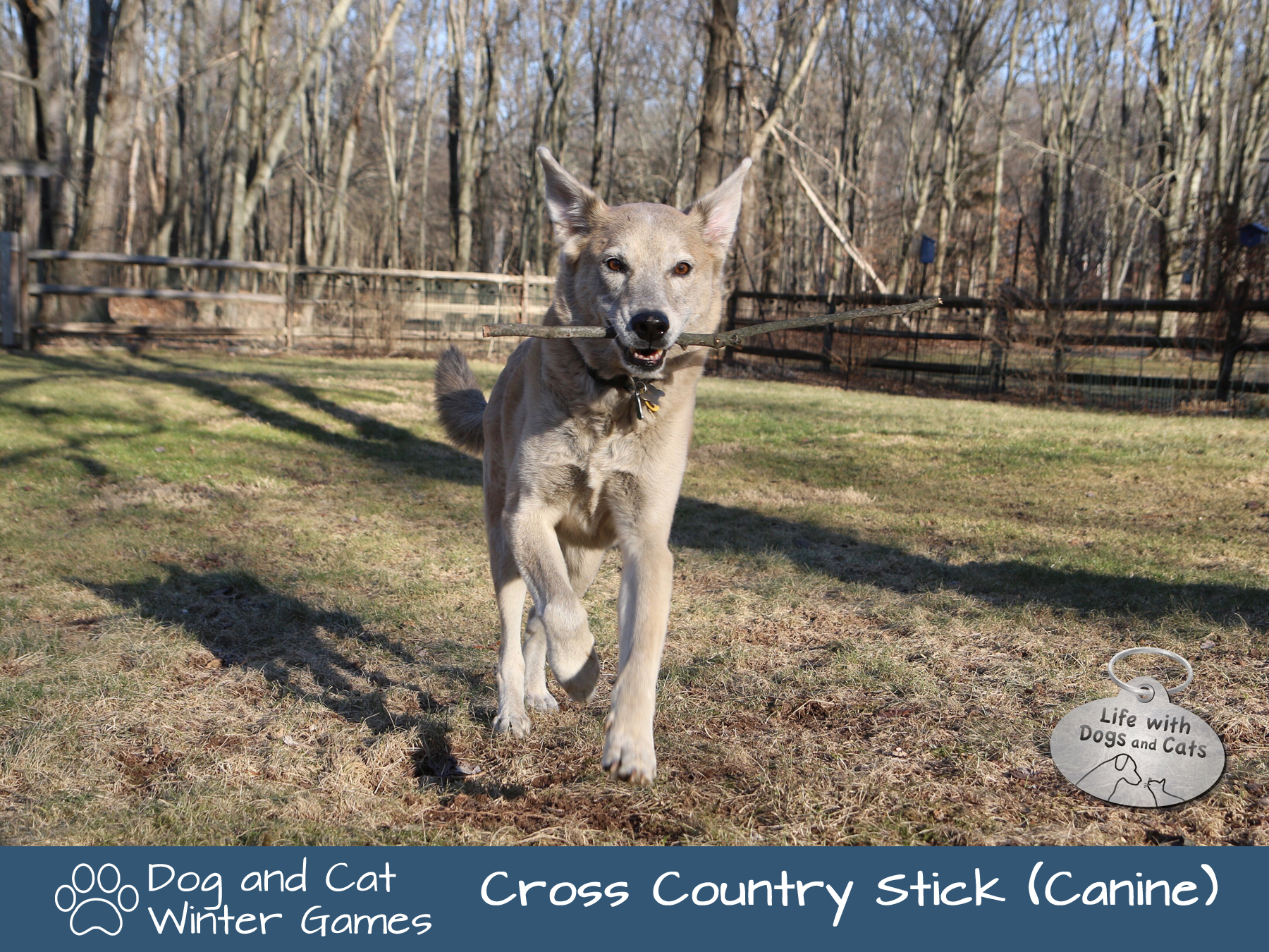Dog and Cat Winter Games: Cross Country Sticking