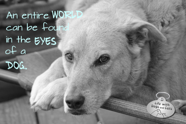 An entire world can be seen in the eyes of a dog