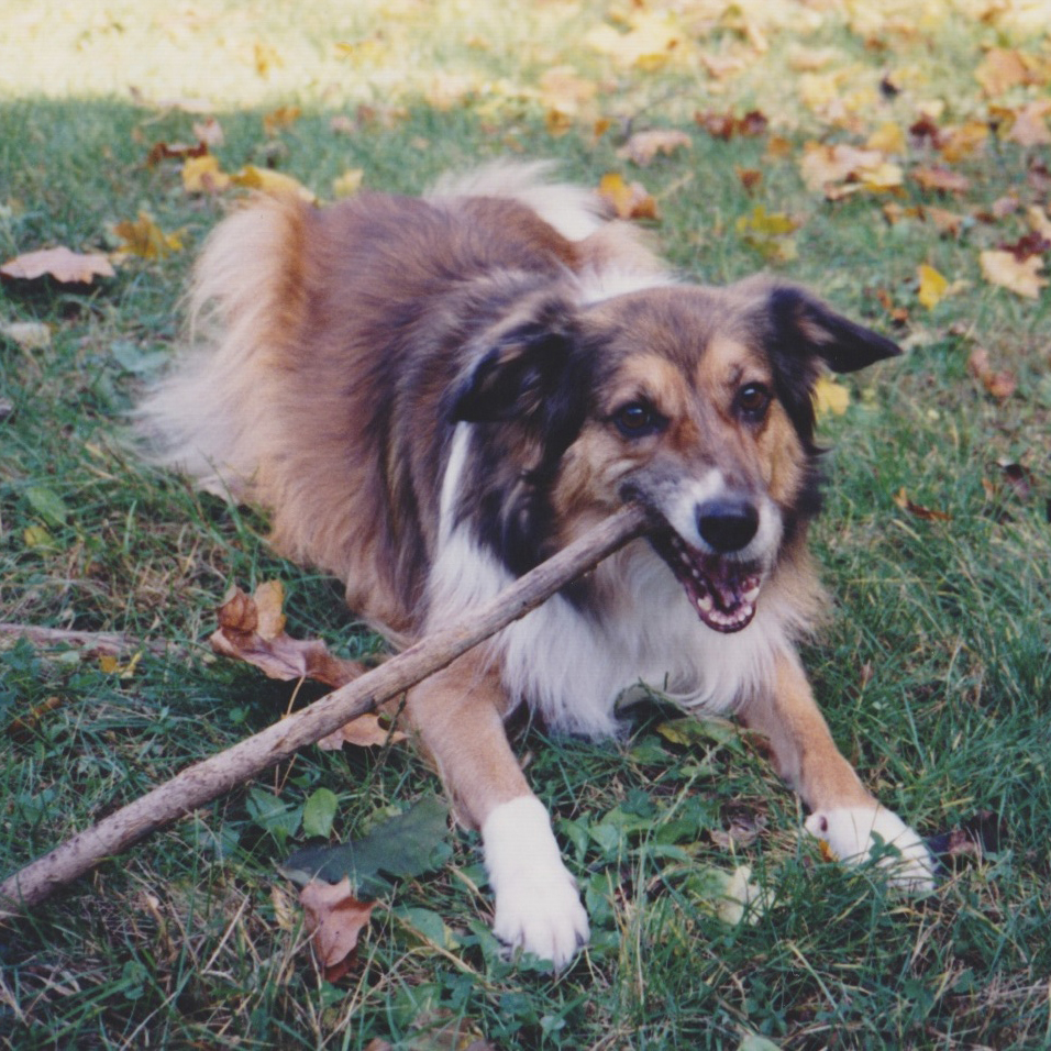 Dogs of yesterday from Life with Dogs and Cats: Kelsey (1984-1997)