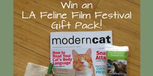 Story: La Feline Film Festival