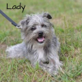 Lady and Strawberry from Somerset Regional Animal Shelter