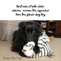 Haiku by Dog: first rule of bite club: silence. remove the squeaker / from the plush dog toy