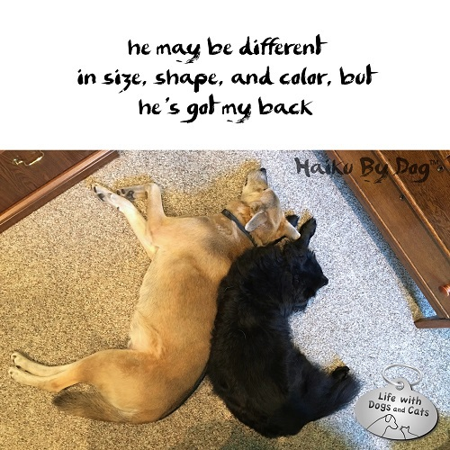 Haiku by Dog: he may be different / in size, shape and color, but / he's got my back
