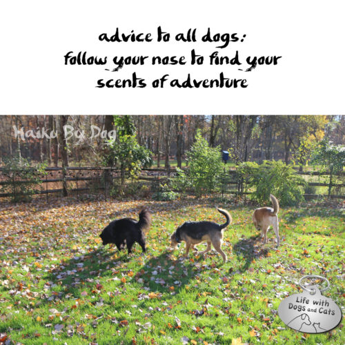 advice to all dogs: / follow your nose to find your / scents of adventure