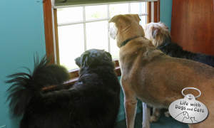 Haiku by Dog: Seconds