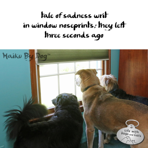 Haiku by Dog: Tale of sadness writ / in window noseprints; they left / three minutes ago