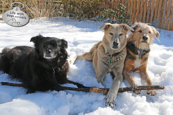 Lilah, Jasper, and Tucker claim ownership to the Best Stick In The Yard.