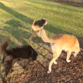 LIlah Jasper and Tucker running with their shadows