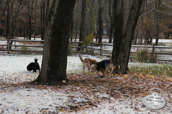 The dogs check out the first snow of the season.