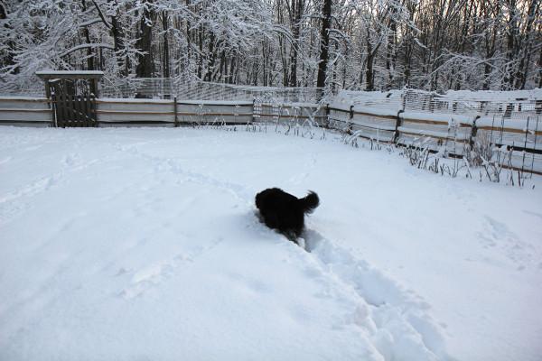 Lilah follows a path through the snow