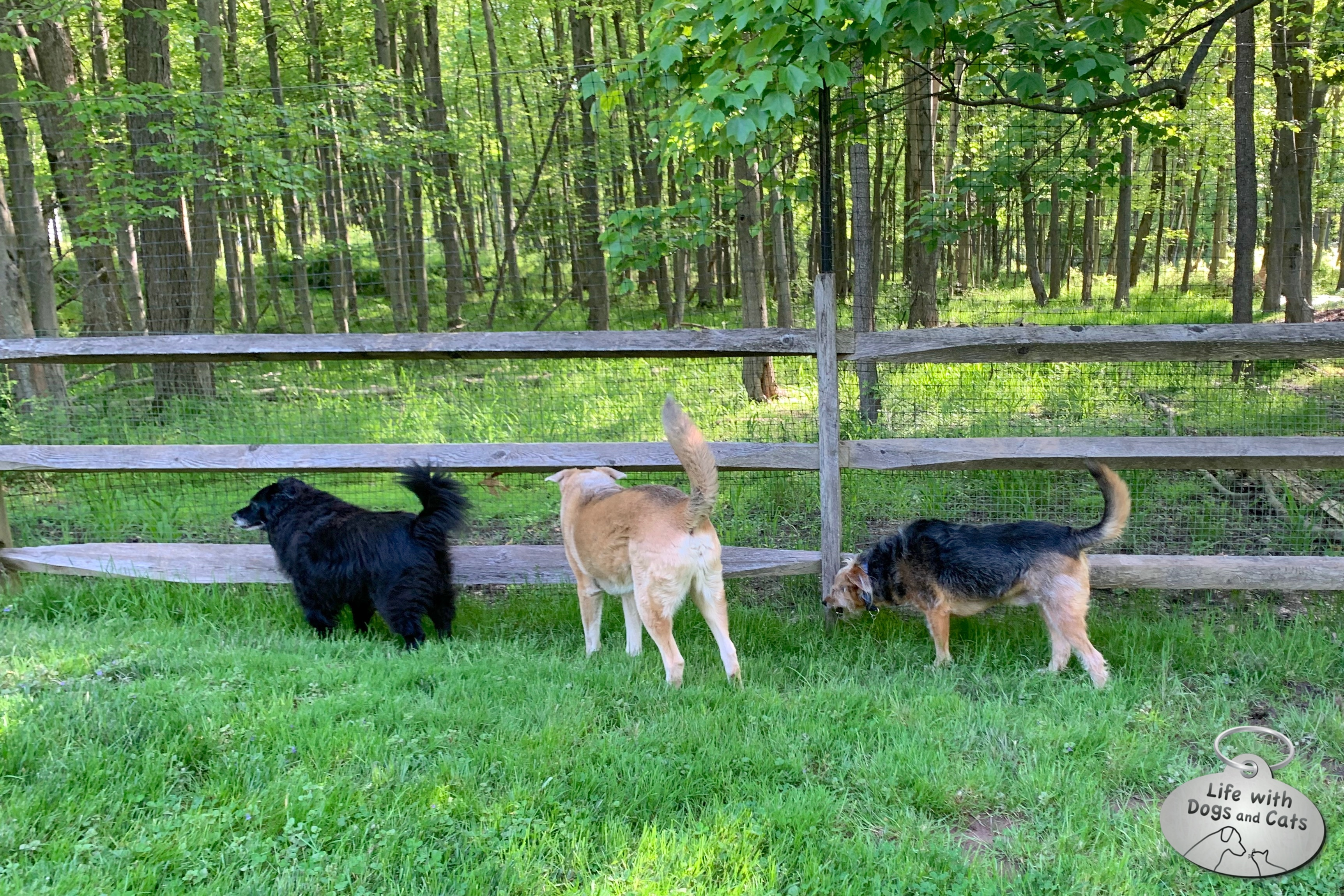 Lilah, Jasper and Tucker began their day on border patrol.