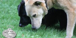 Haiku by Dog: Trail