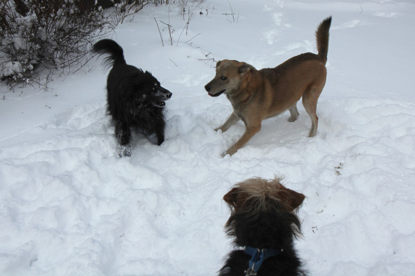 Lilah and Jasper are very aware that Tucker can't join in the fun.